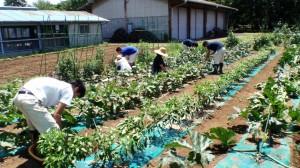 野菜栽培の様子